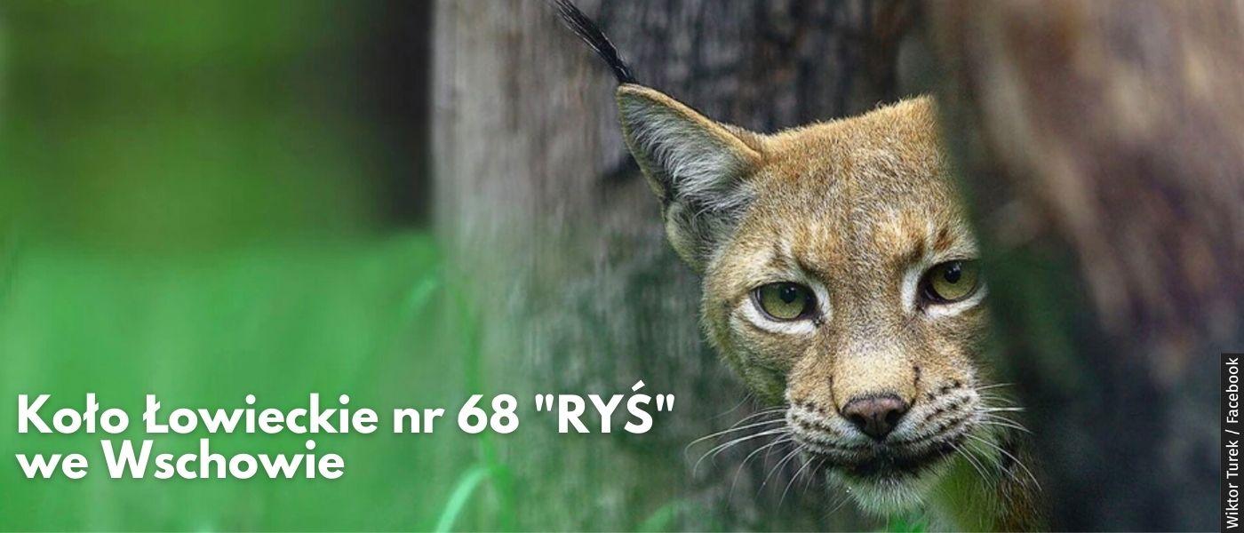 """Koło Łowieckie Nr 68 """"RYŚ"""" we Wschowie"""